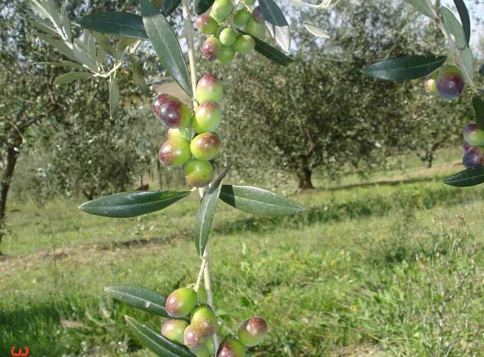 Sicilia 5-10 Settembre 2009 102